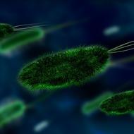 Интересные идеи для создания учебного проекта по биологии