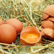 Бронированное яйцо