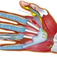 Как создать модель руки