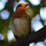 Викторина ко дню птиц