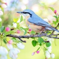 Викторина о весне